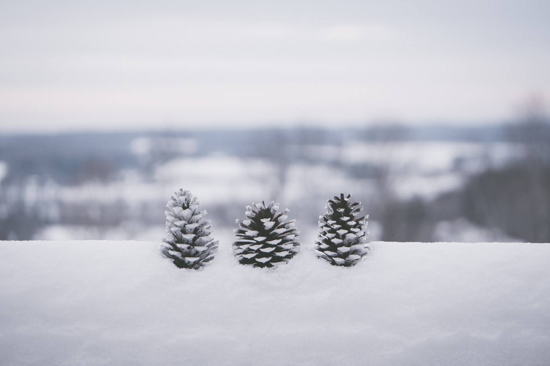 PineTrees_Snow-5.jpg