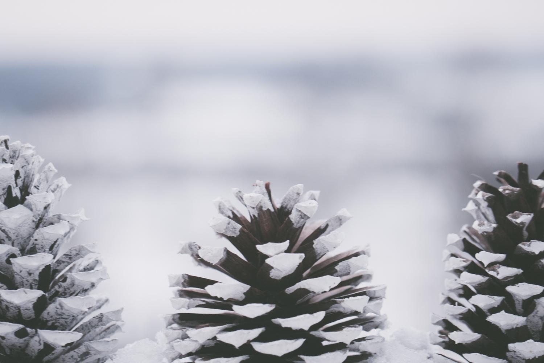 PineTrees_Snow-4.jpg