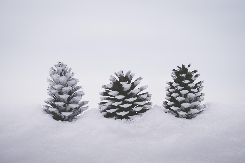 PineTrees_Snow-6.jpg