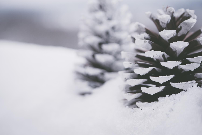 PineTrees_Snow-9.jpg