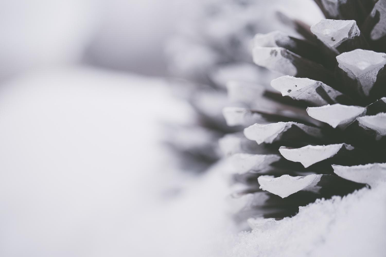 PineTrees_Snow-10.jpg