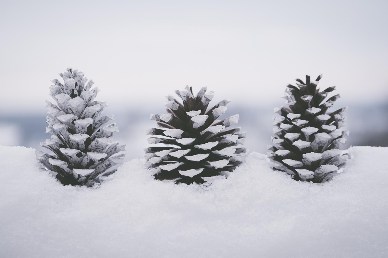 PineTrees_Snow-11.jpg