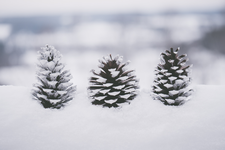 PineTrees_Snow-12.jpg