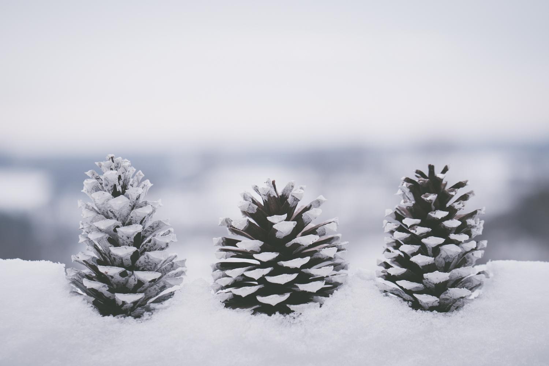 PineTrees_Snow-13.jpg