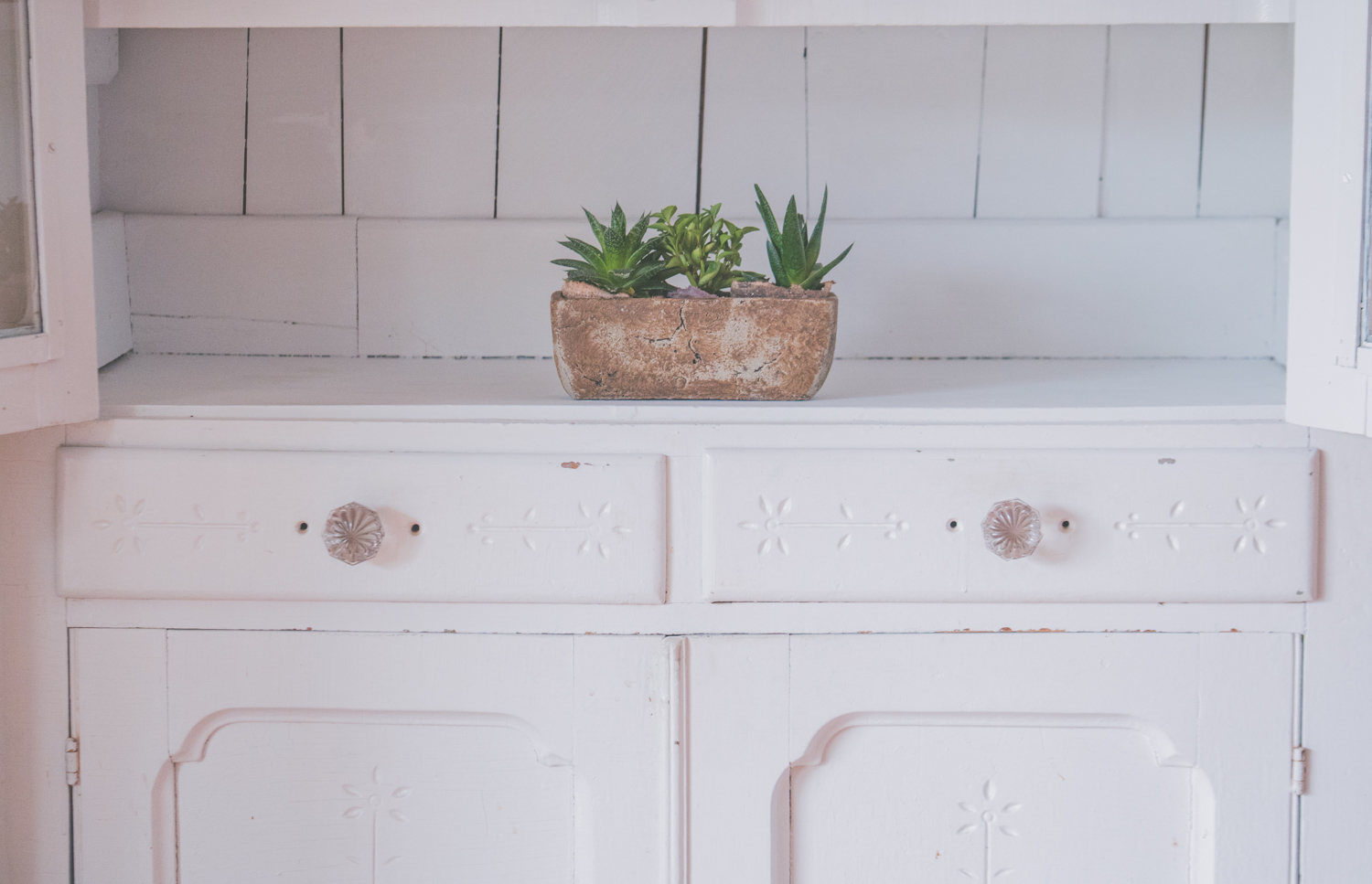 Succulents In White Cabinet-2.jpg