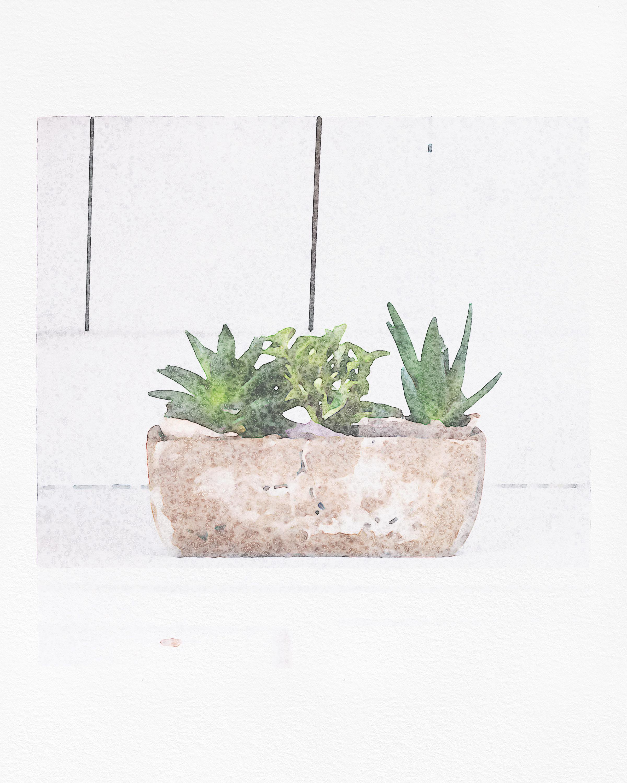3 Succulent Watercolor Middle.jpg