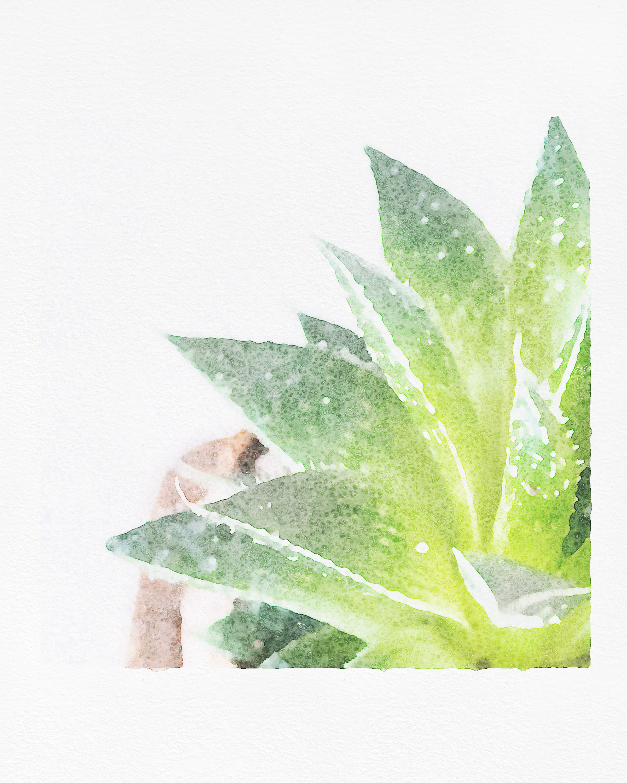 2 Succulent Watercolor Right.jpg