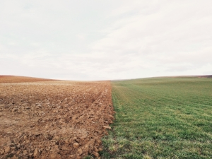 Soil_image12.jpg