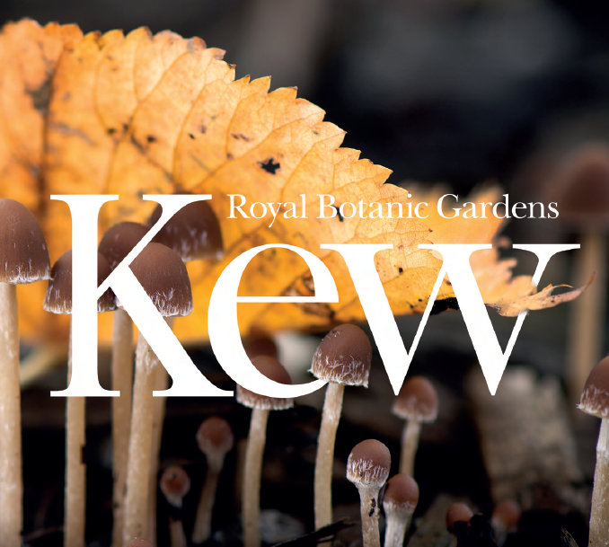 State of the World's Fungi    Kew Royal Botanic Garden, 2018   These organisms are responsible for…global cycling of nutrients, carbon sequestration, & even the prevention of desertification in some drought-prone regions.