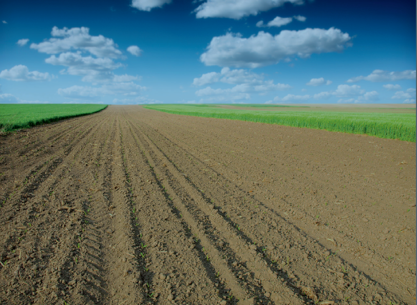 Opportunities for Soil Sustainability in Europe    European Academies Science Advisory Council  September 2018   Soil biodiversity & its contribution to above-ground diversity, modern farming, plant and human health (&) interactions between soil & climate change.