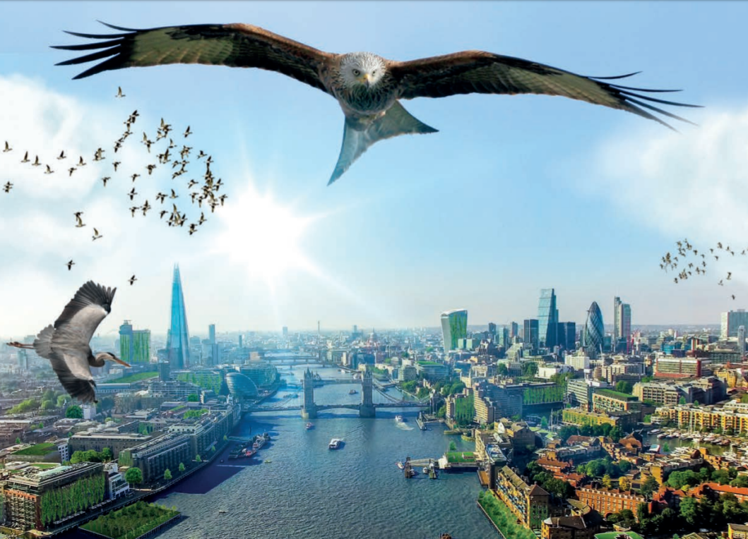 Towards a Wilder Britain    The Wildlife Trusts  May 2018   The Trusts are calling for a wilder, better Britain. Nature needs to recover, for better health, climate control, flood management, enjoyment, employment & more.