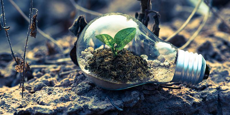 Bulb soil.jpg