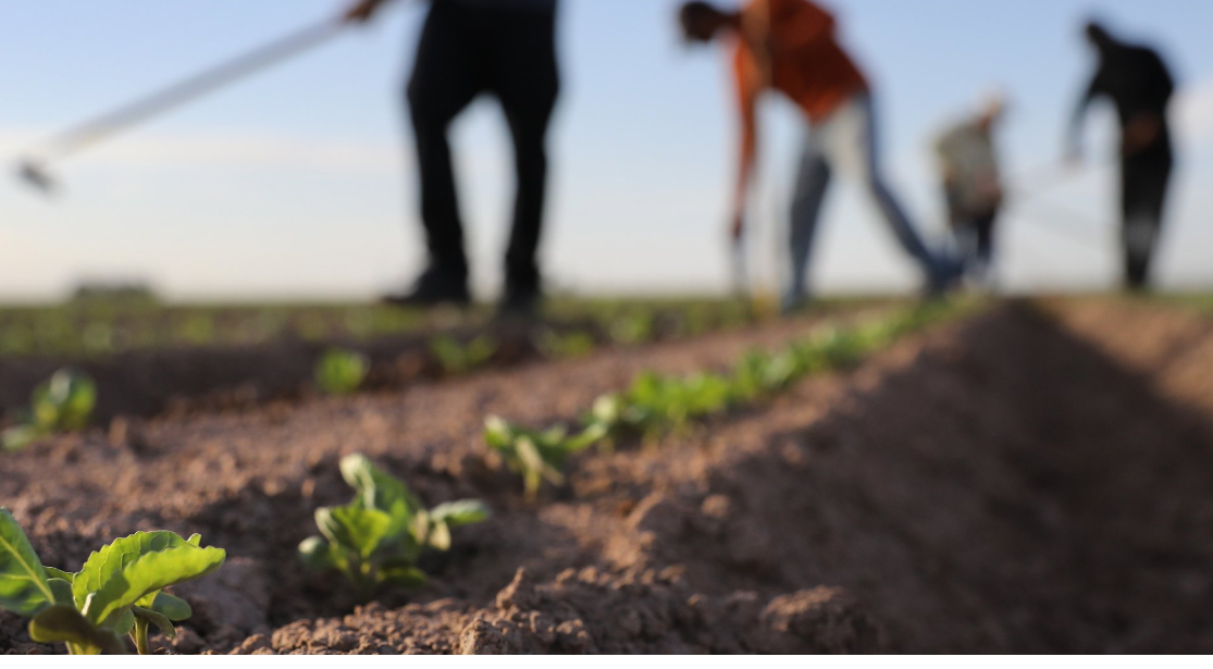 Soils & Climate: From hidden depths to centre stage?    Hoffman Centre for Sustainable Resource Economy  March 2018   Knowledge gaps and priorities to accelerate soil organic carbon storage & sequestration.