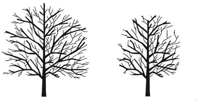 Tree Surgery Sevenoaks