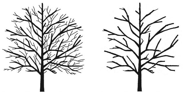 Tree Care in Chislehurst