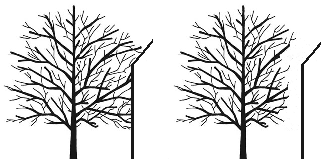 Tree cutting Kent & London