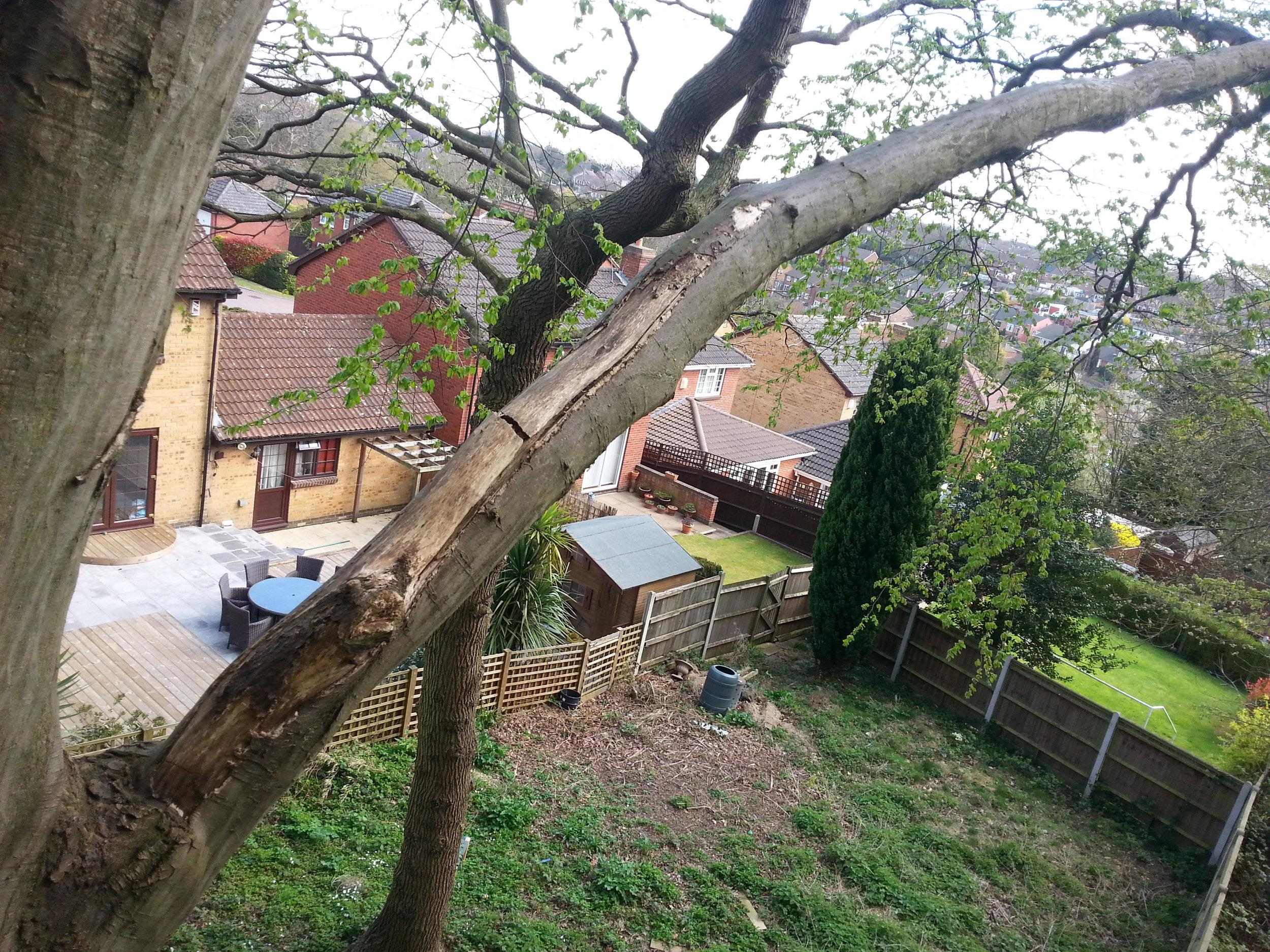Tree report Kent