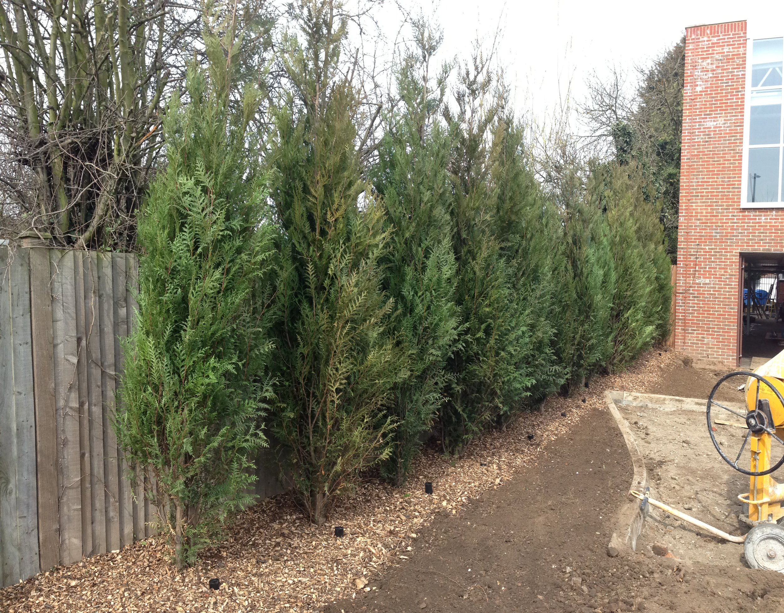 Tree Planting Services in Kent & London