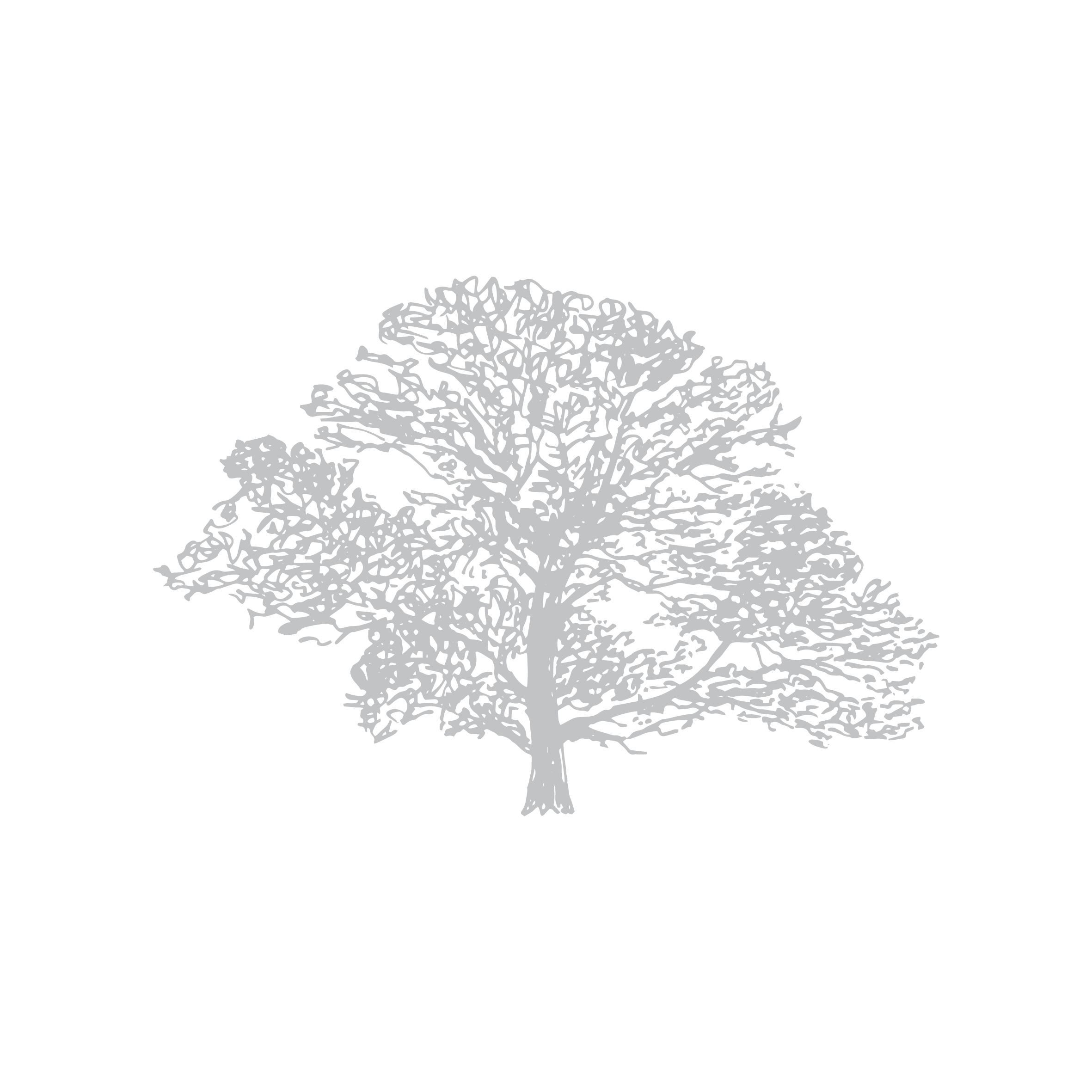 Down To Earth illustration 4_Silver Birch.png