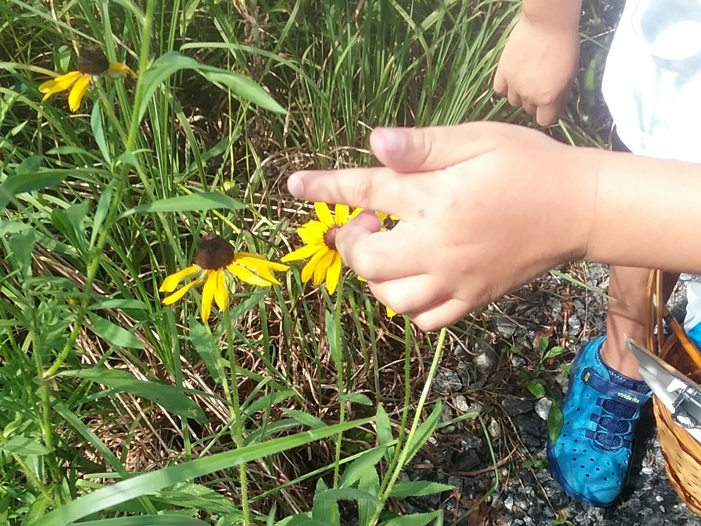 Plant Discovery  The native plants of Blue Heron are abundant in all seasons. We'll touch, smell, and observe plants in two different habitats and build an understanding of how plants grow and reproduce.