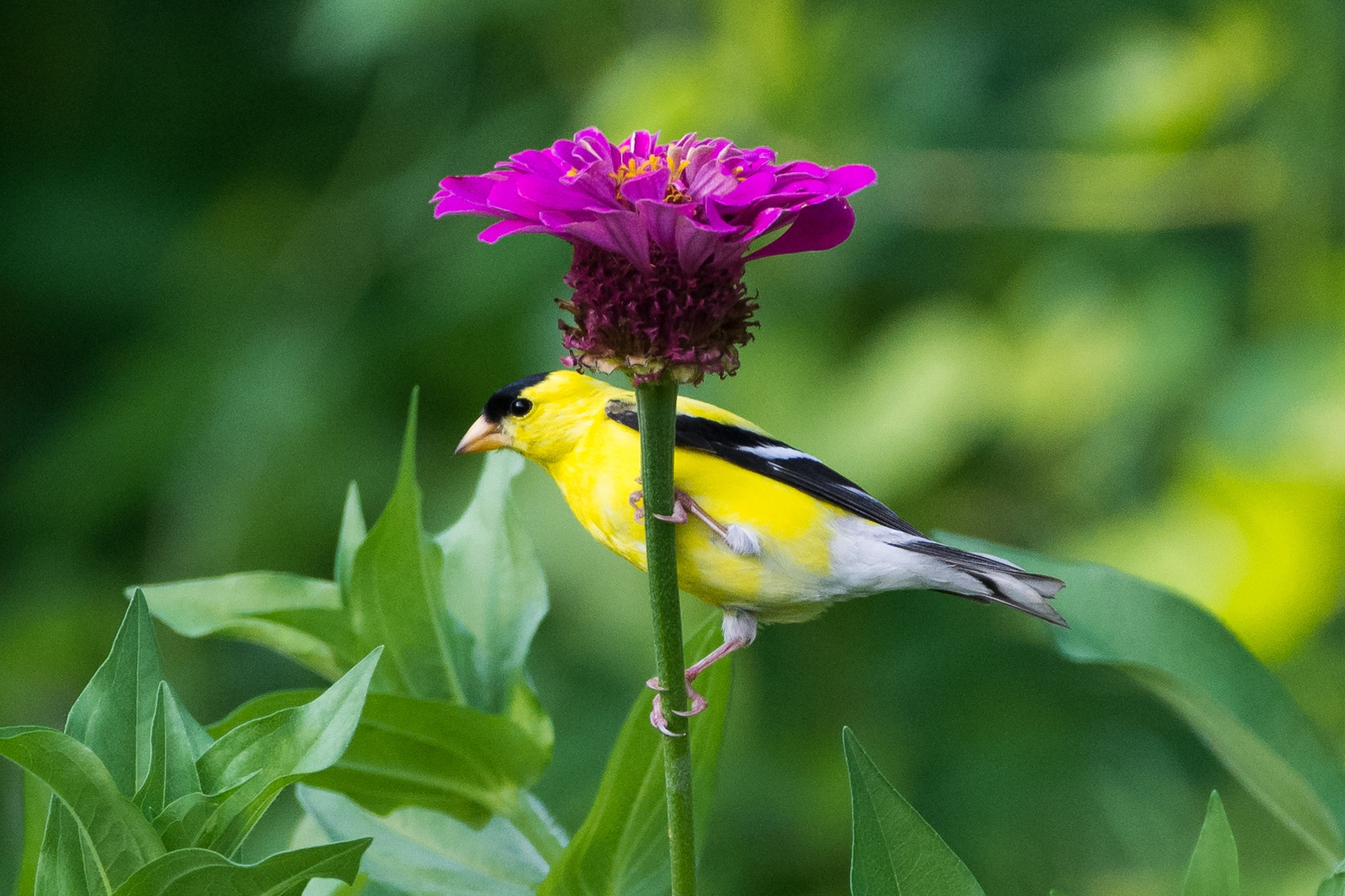 Bird Watching   What makes a bird a bird? Let's find out by looking for some of our feathered friends along our trails. We'll learn how to use binoculars, recognize birds by their call, and see if we find different birds in different habitats.