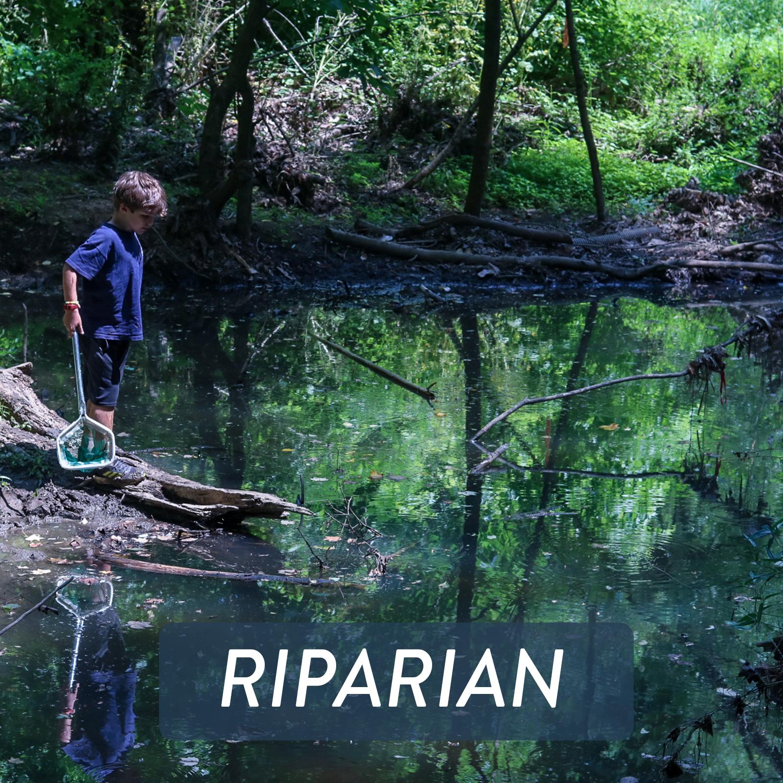 Web Thumbnails - RIPARIAN.png