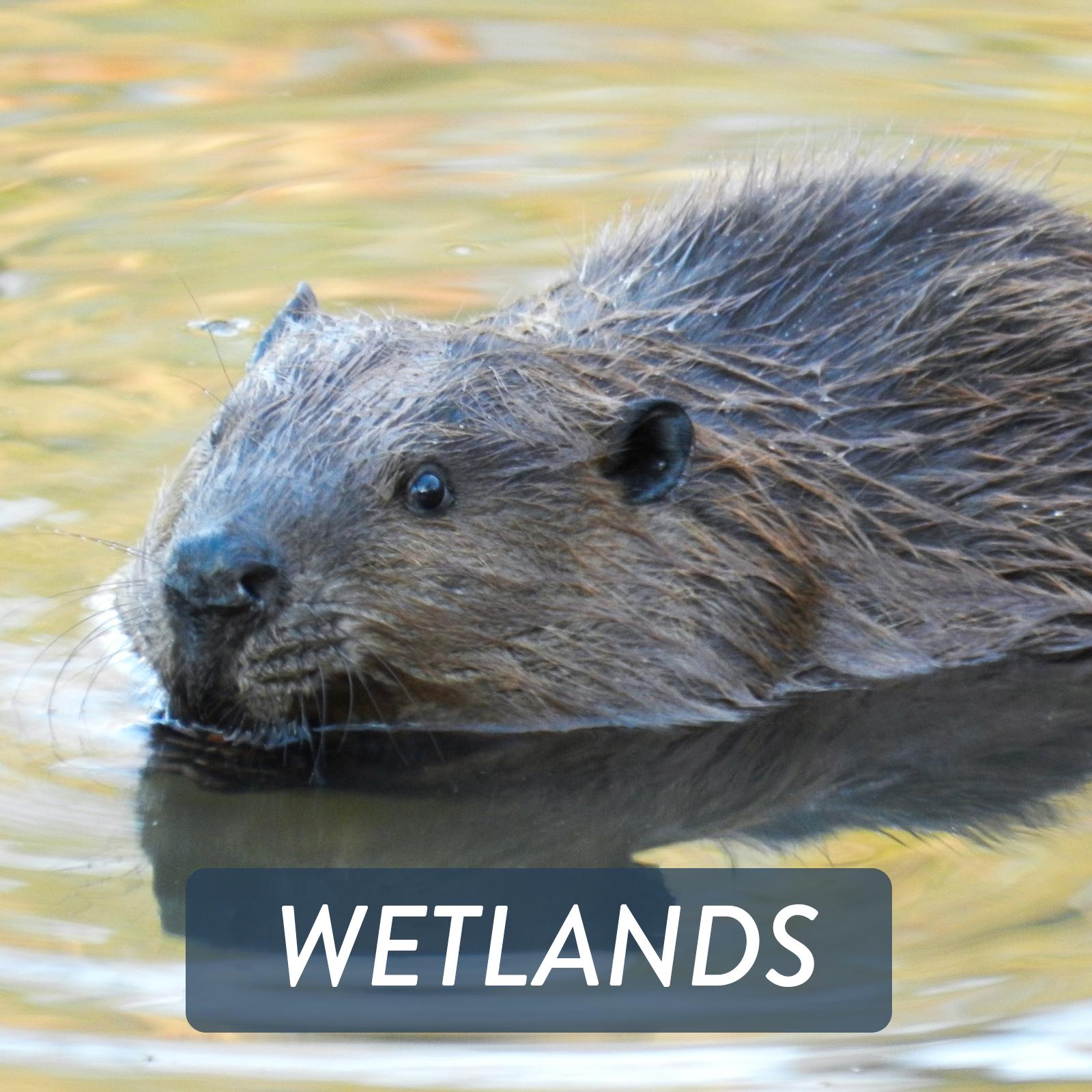 Web Thumbnails - WETLANDS.png