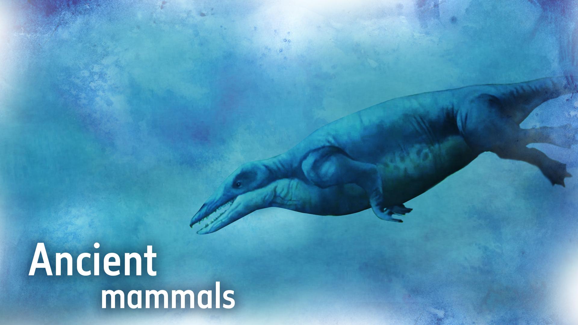 10 - Ancient mammals.jpg