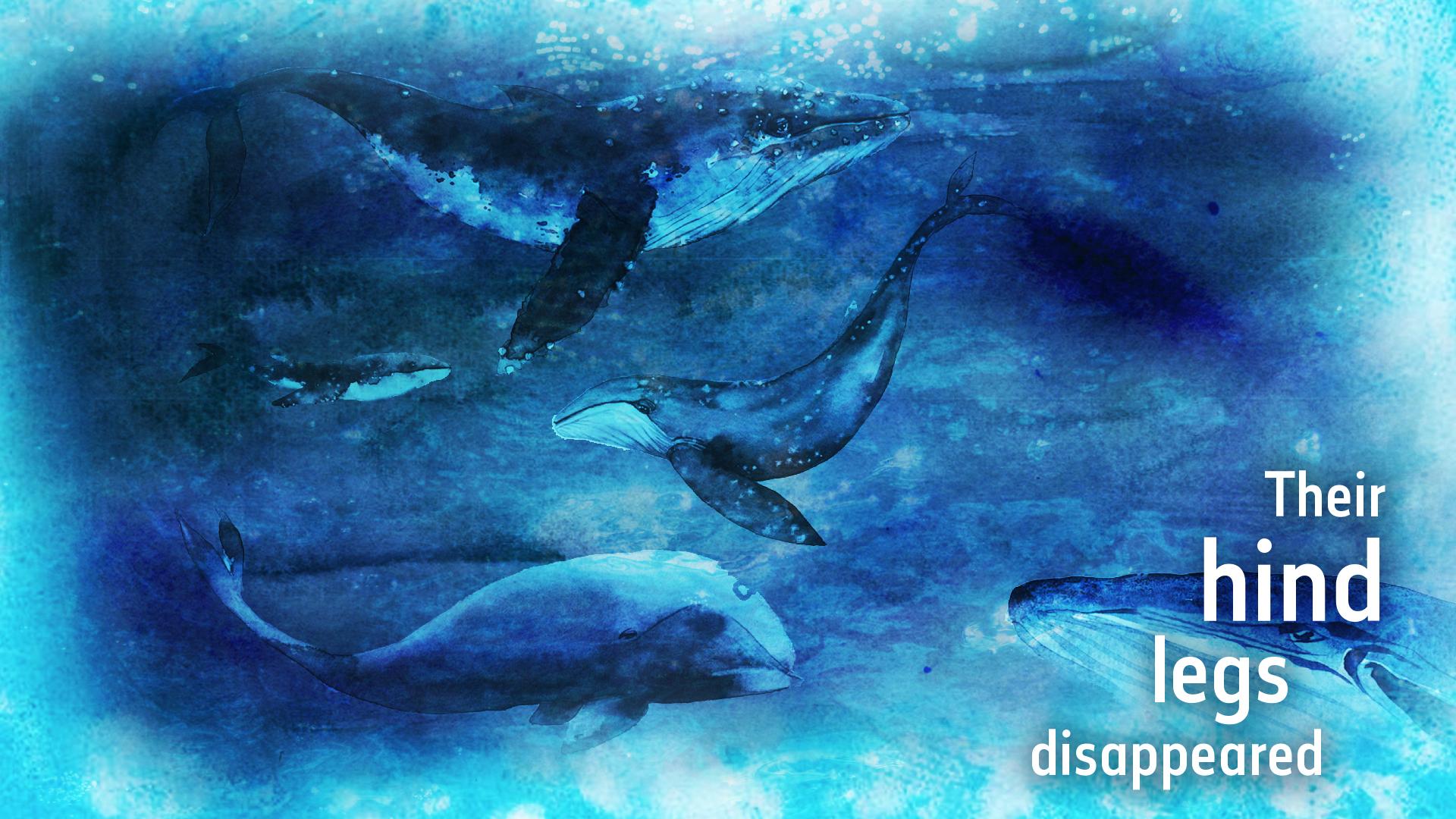 16 - Their hind legs disappeared.jpg