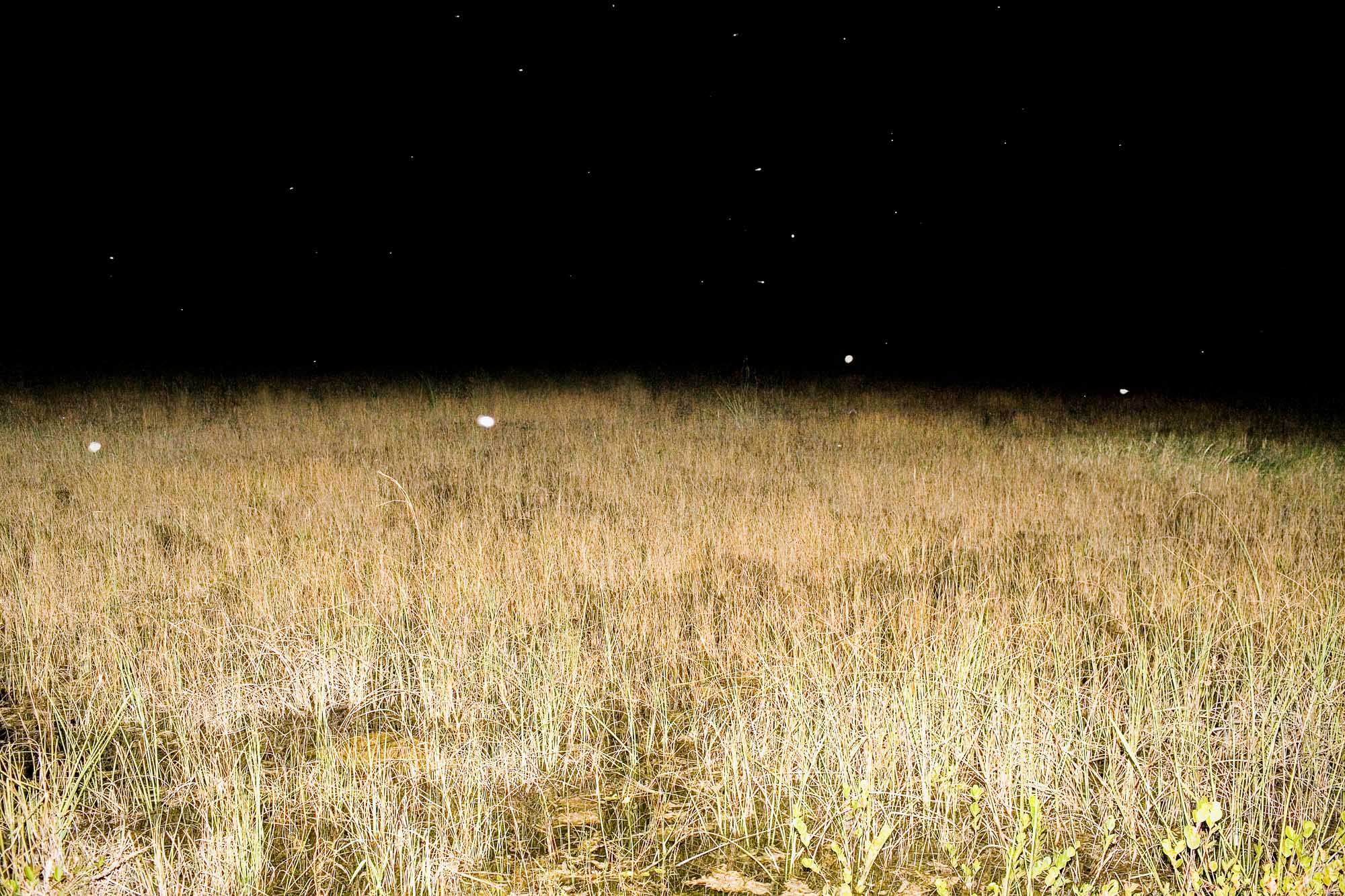 Everglades, 2006.