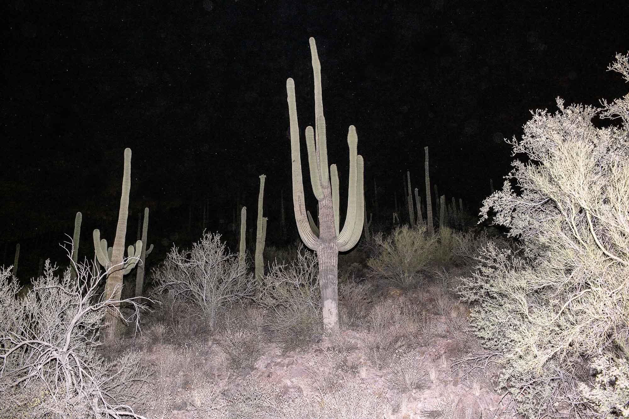 Lost Light, Sonoran Desert, 2010.