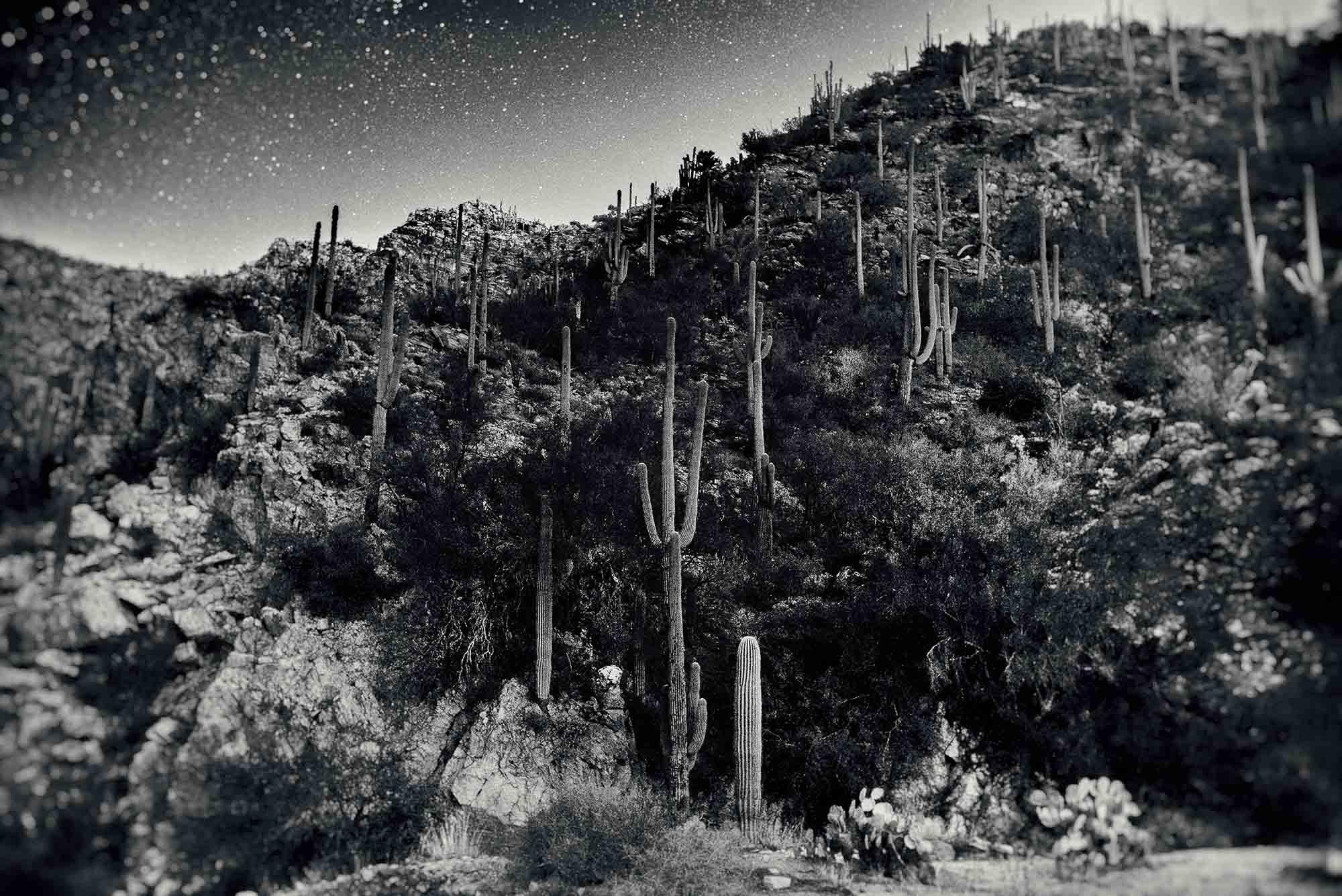 Tucson II, 2015.