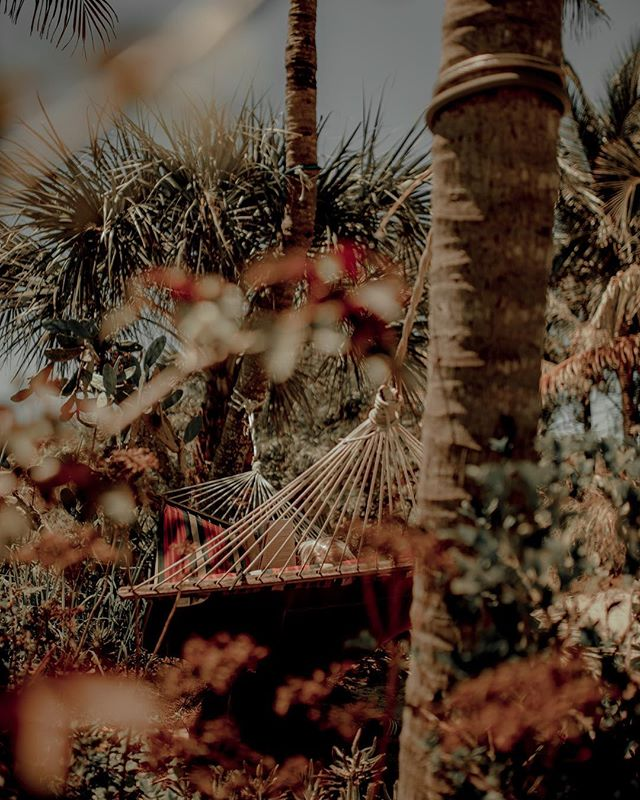 I can think of few things more peaceful than laying in a hammock, reading a book, surrounded by tropical plants.