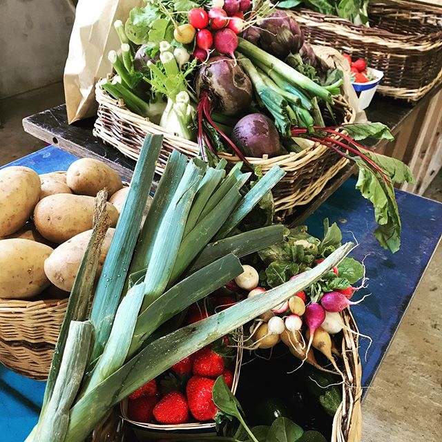 Just paid a visit with Laure to our local organic farm to pick up some veggies for Charlotte Wise's retreat, just wonderful #yogaretreatfrance #organicfarming @laureinprovence