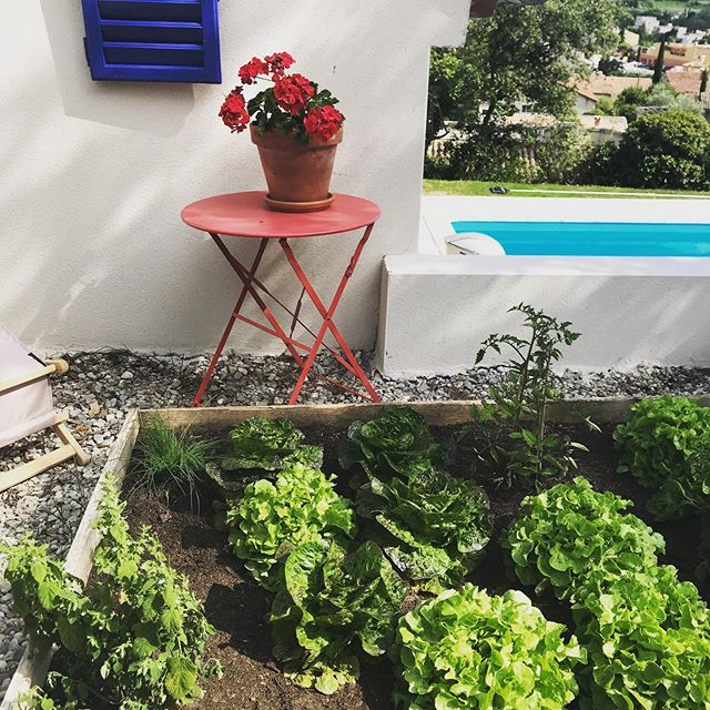 For our next two retreats @timsibleyyoga and @kbmundie we will be eating our own lettuces! #yogaretreatprovence #yogaretreatfrance