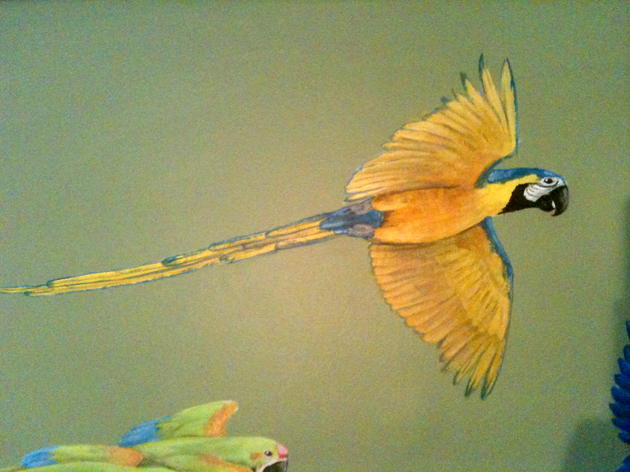 Rainforest Macaw Detail Frederick Wimsett - murals and artistic design - other projects.jpg