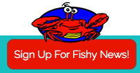 fishy_news.png