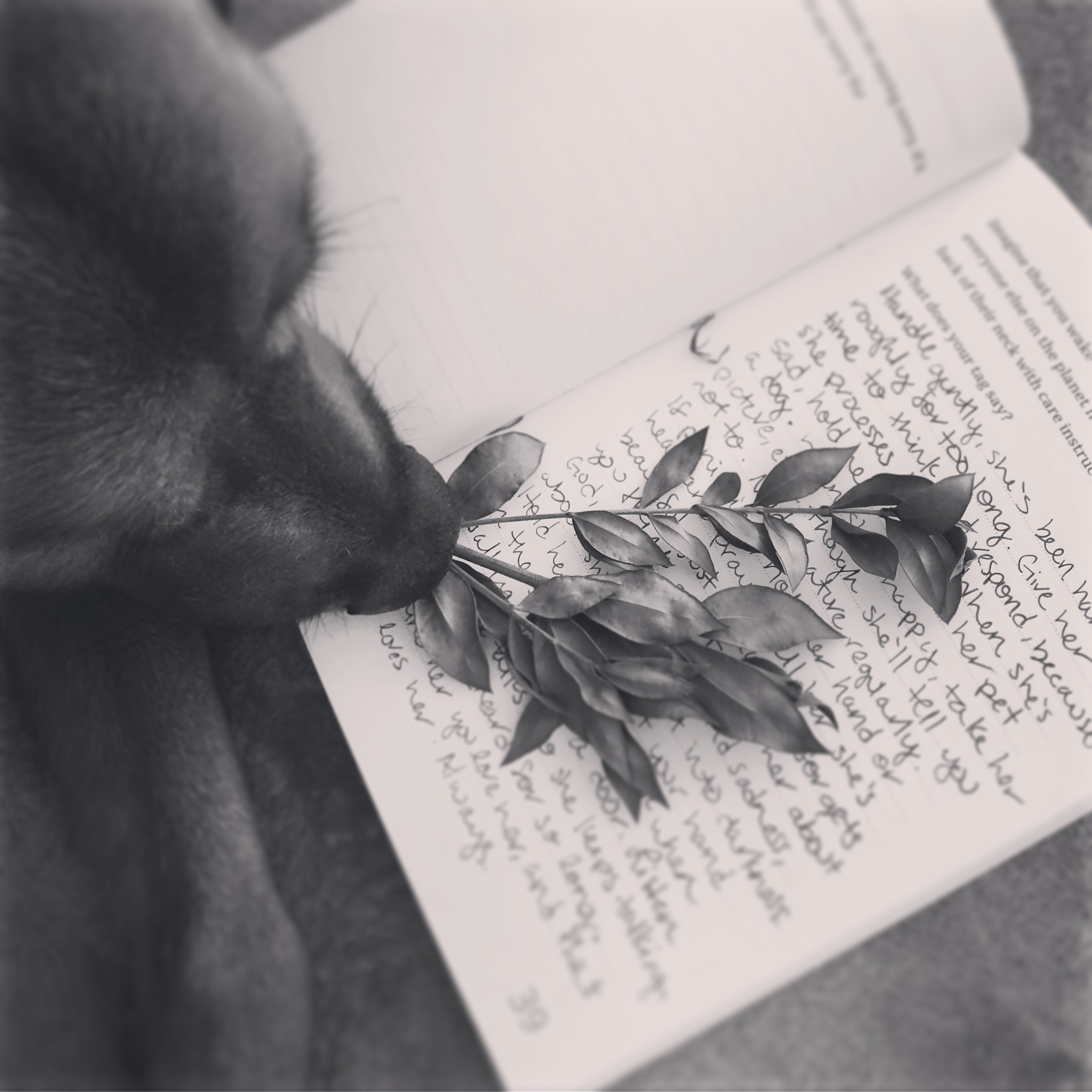 Three things in one picture that clear my mind- journaling, sitting quietly with my dog, and nature in any form (today it's dried greenery lying around).
