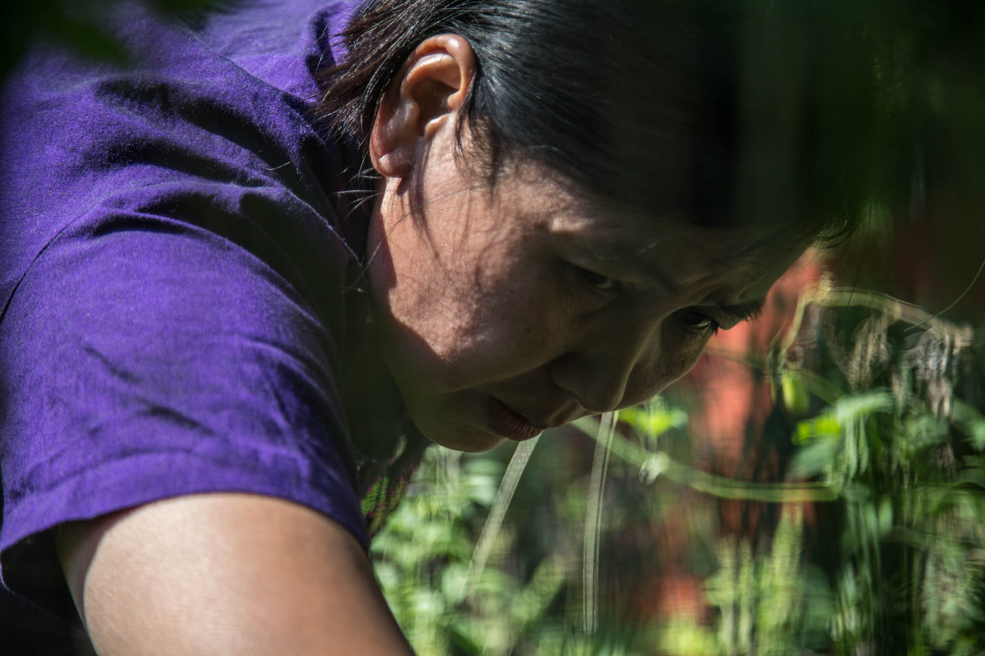 "Lwin picks vegetables in her backyard garden for the families dinner. She had seeds sent over from Myanmar, and now grows traditional crops. The garden is one of the ways that she continues on her practice with farming, as her parents were farmers and she grew up farming in Myanmar. ""We produce too much food to eat,"" she said. ""We usually have to give some away to our neighbors."""