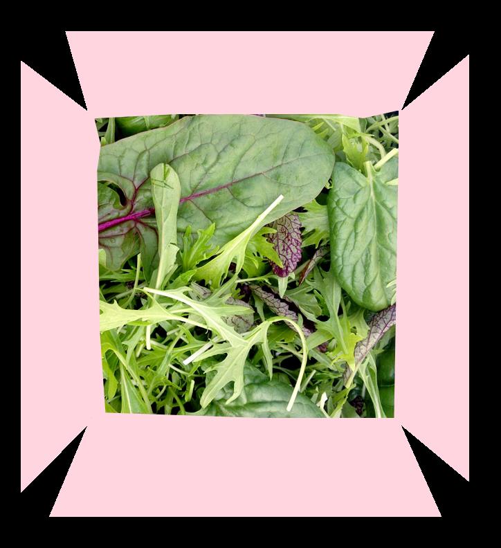 Salad Box Copy@2x.png