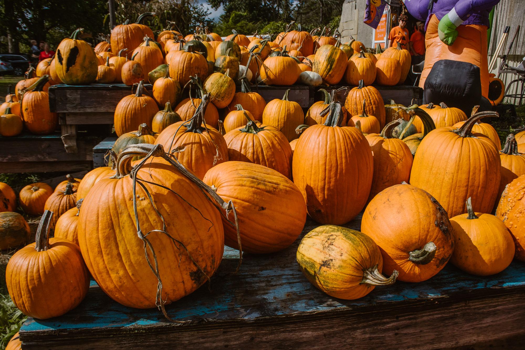 bethke-farms-pumpkin-patch-grand-haven-michigan (16).jpg