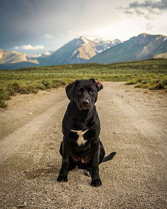 dirt road puppy portraits.