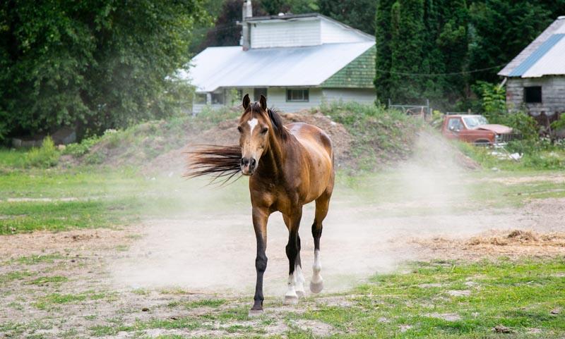 Horses running in field.jpg