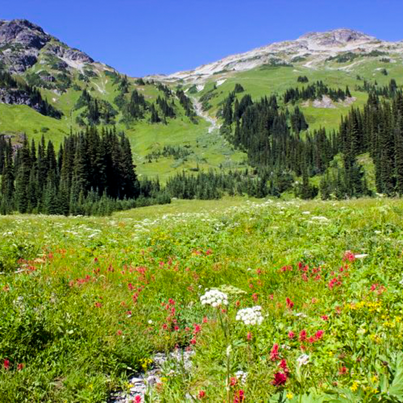 Tenqulle+alpine+meadows.jpg