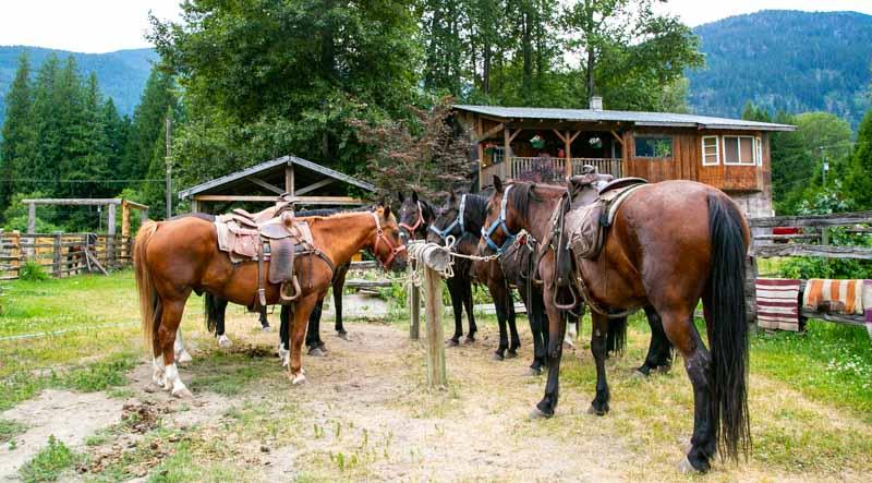 Horses+tied+at+ranch.jpg