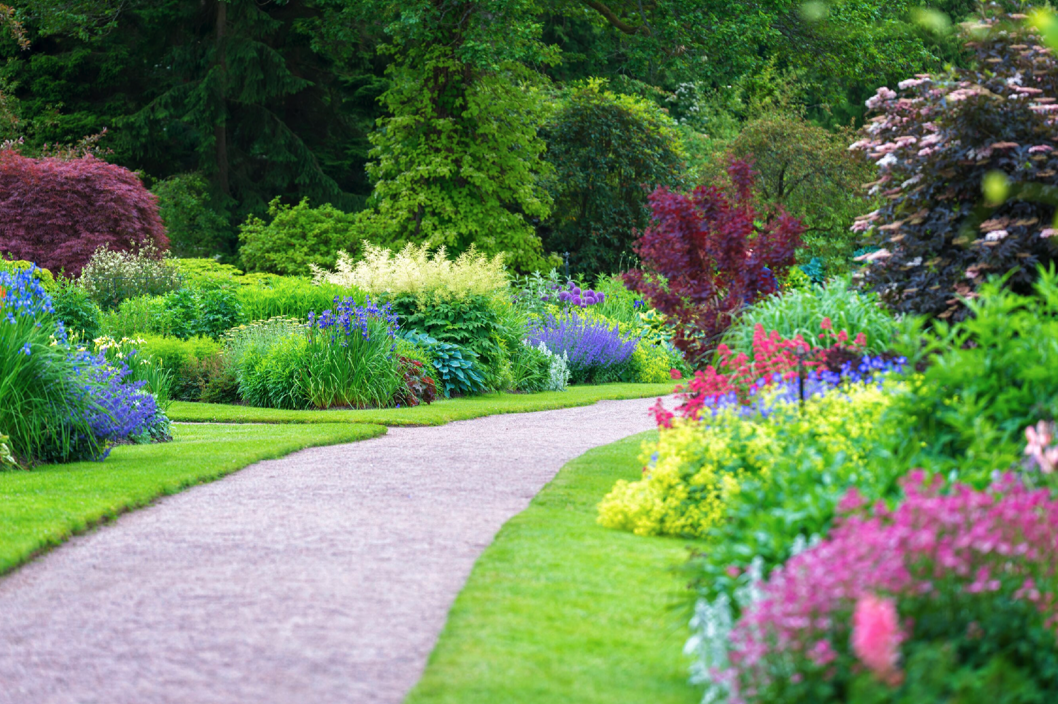 SHRUBS • TREES • PERENNIALS • ANNUALS