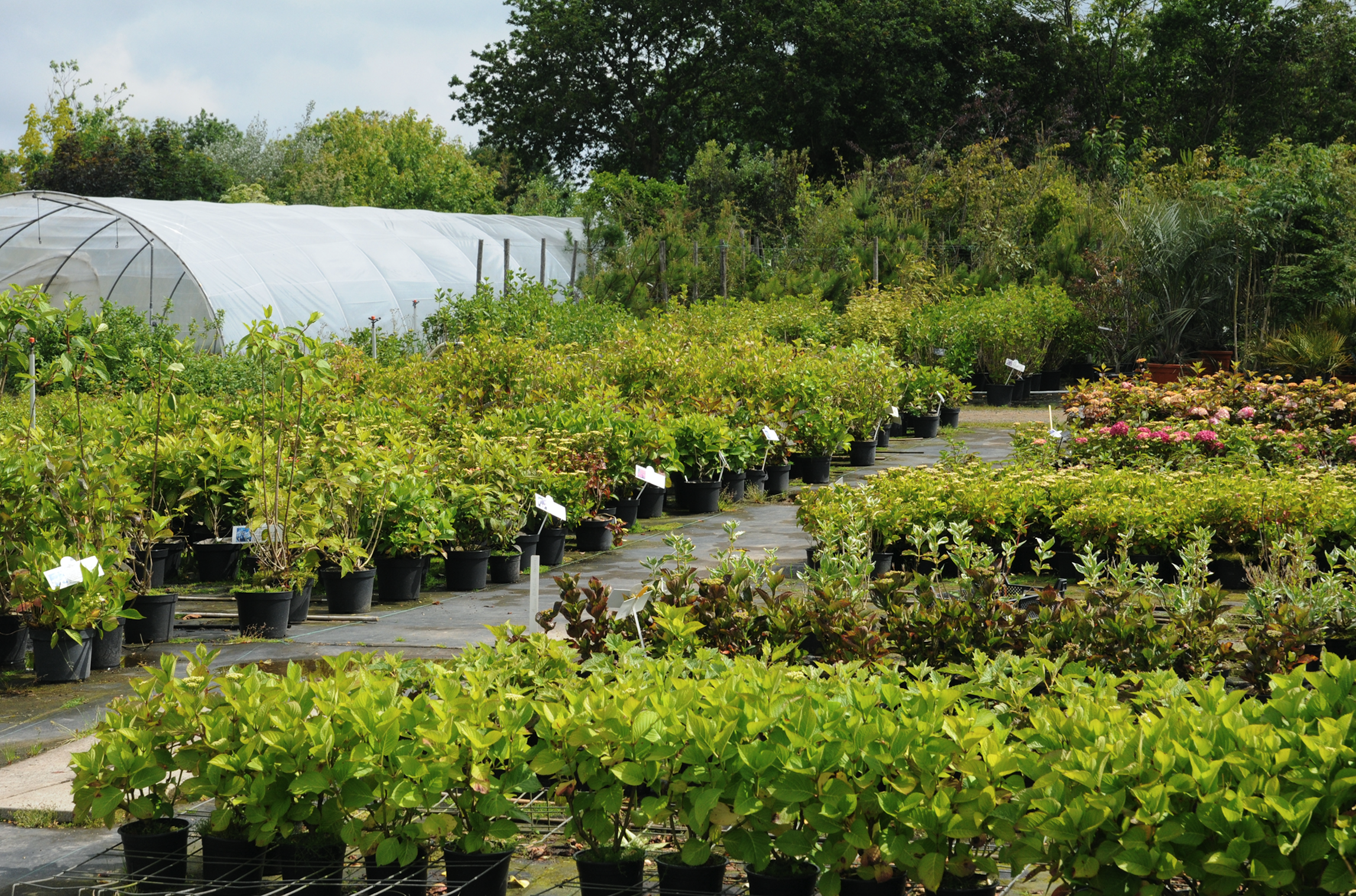 Best landscape nursery supply company in Rockland County, NY
