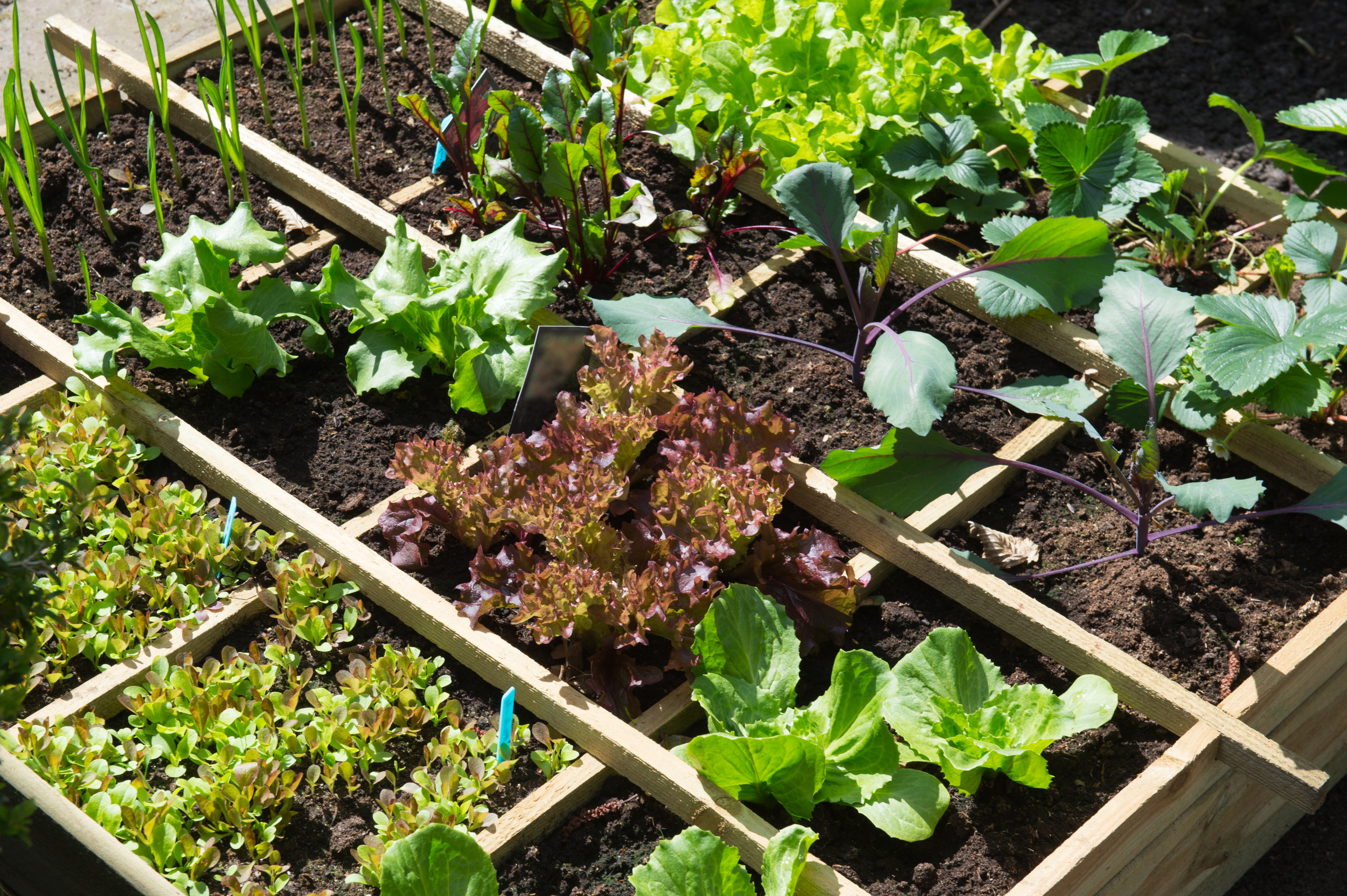Get Your Mulches for Vegetable Gardens from Our Wholesale Nursery in the Sussex County, NJ, Area