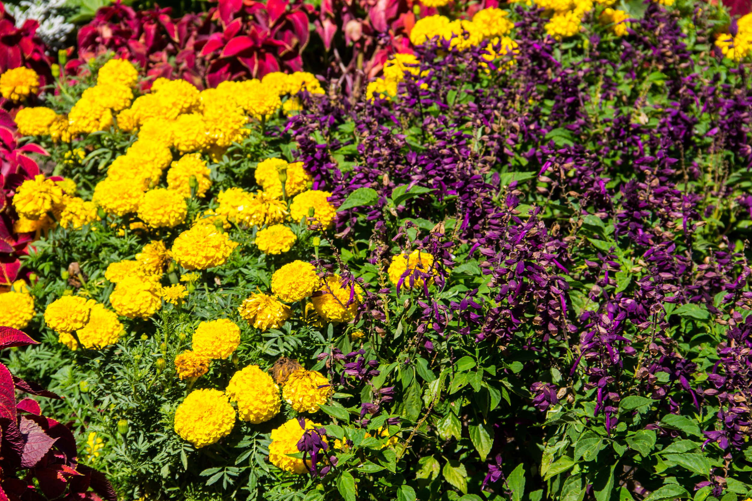 Our Garden Center's Tips for Combining Perennials and Annuals in Hudson Valley, NY