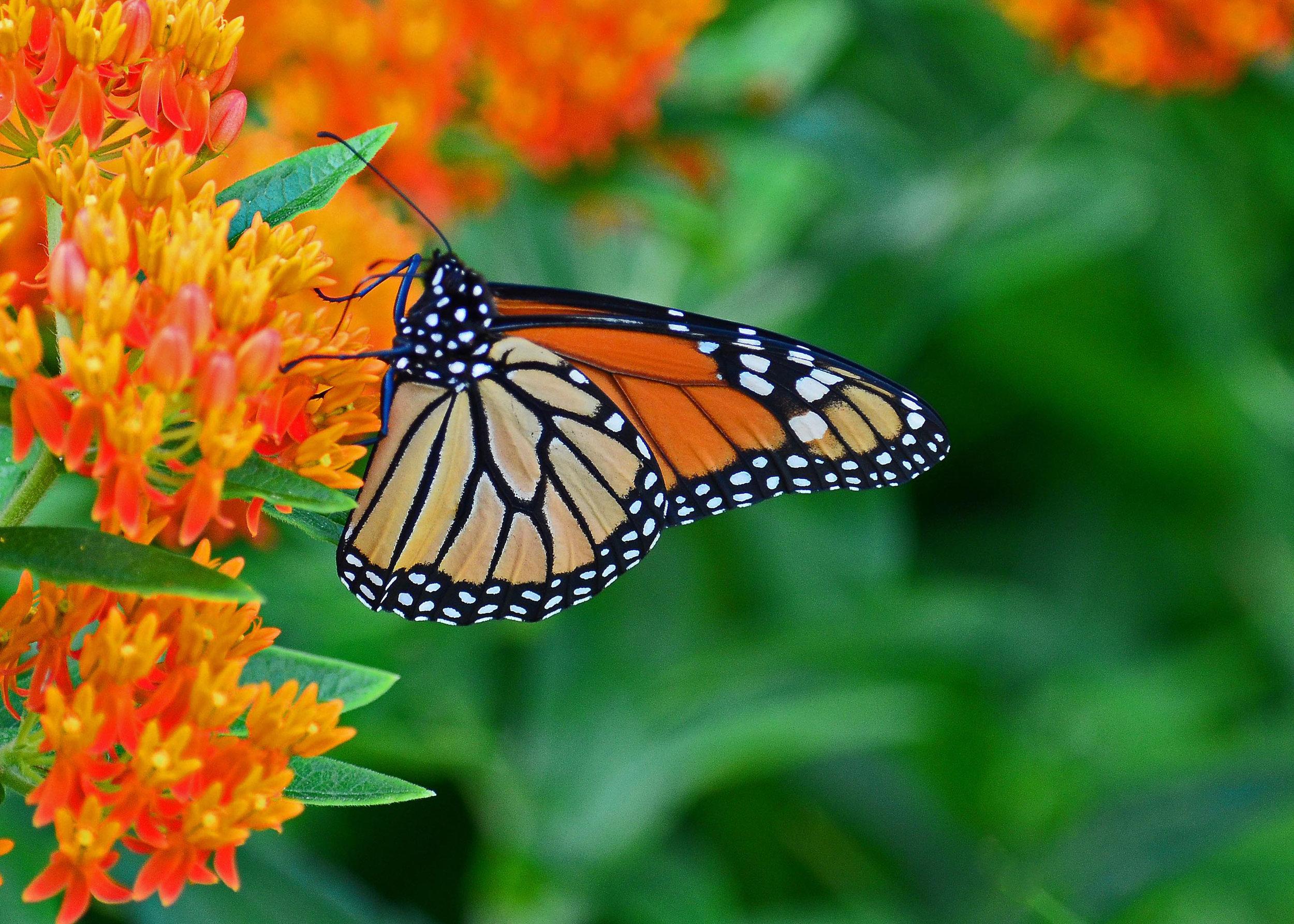 Garden Center's Tips for Native Plant Gardening in Hudson Valley, NY